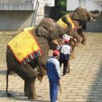 あんまり観客がいないなか、がんばる象さん