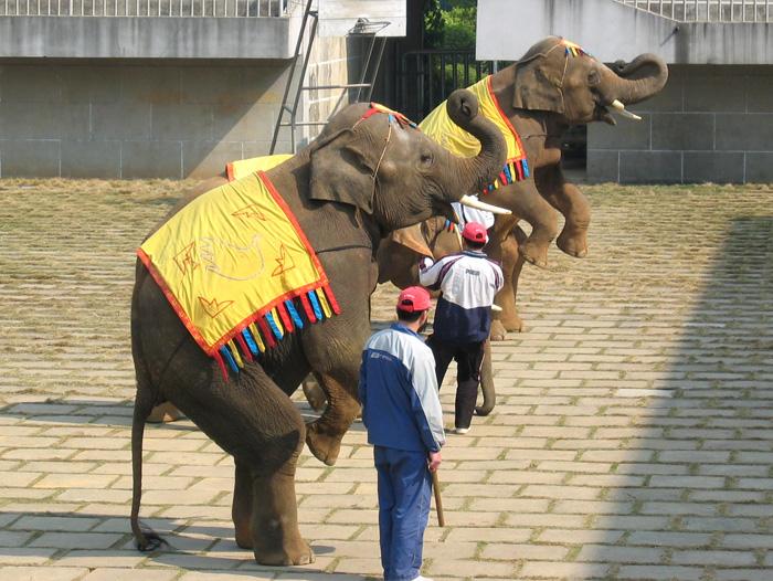 南寧動物園・象さんのショー